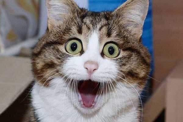 猫咪惊讶的表情