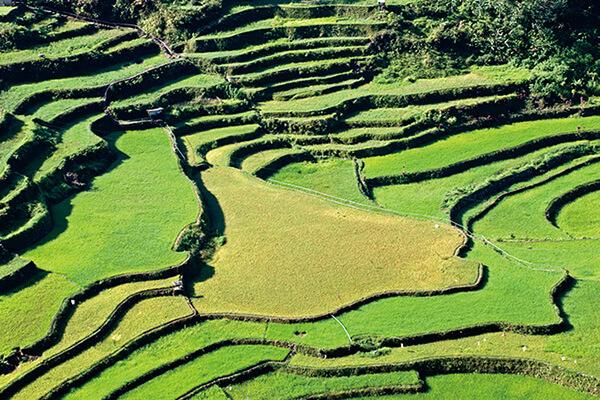 菲律宾自然遗产,菲律宾科迪勒拉水稻梯田