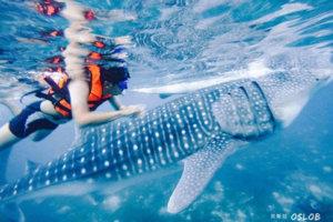 菲律宾夏令营-浮潜