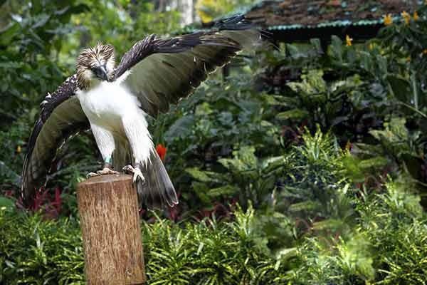 发现菲律宾鹰的探险家