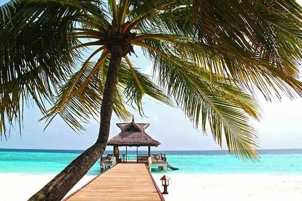 菲律宾椰树