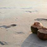 coconut-1201240_640