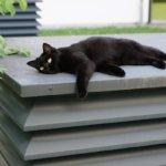 cat-1593136_640
