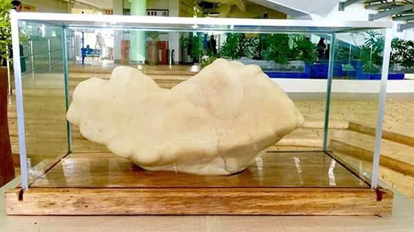 菲律宾最大珍珠