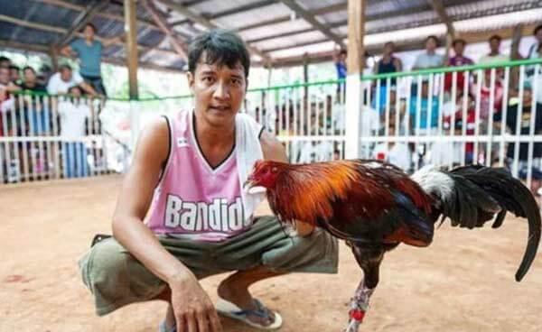 菲律宾斗鸡比赛