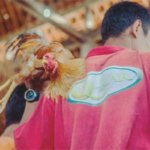 菲律宾警察执勤中被一只公鸡杀死,这可能是最奇葩的因公殉职了187