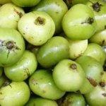 batwan_fruits-1024×915-1024×585