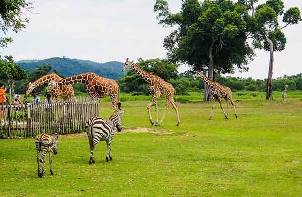 菲律宾动物园